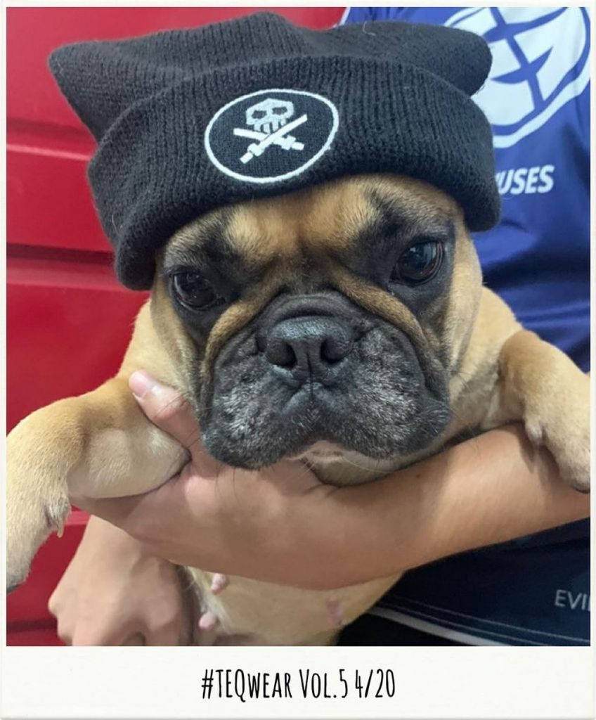 teqwear beanie on bulldog